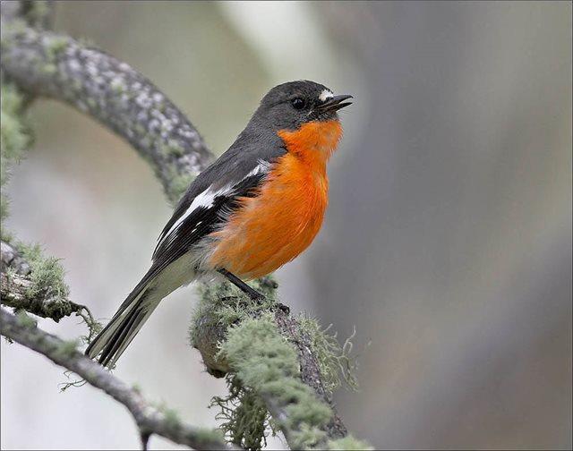 Μεθυσμένα πουλιά... έχουν προκαλέσει «πανικό» στη Μινεσότα