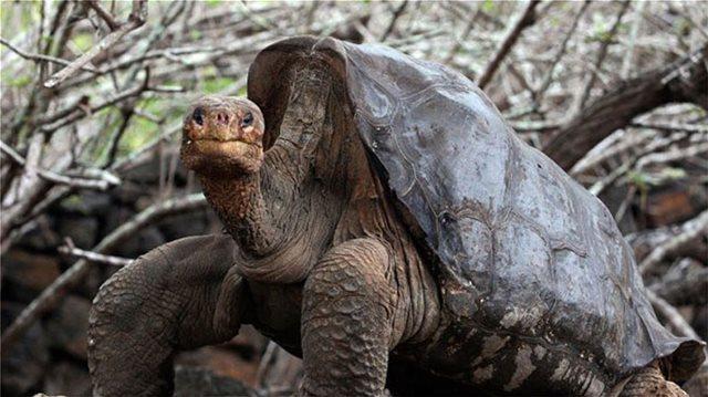 Σοκ: Έκλεψαν 123 γιγαντιαίες χελώνες από τα νησιά Γκαλαπάγκος