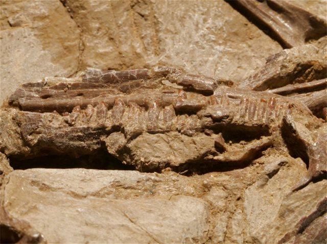 Βρέθηκαν κατά τύχη θαμμένοι δεινόσαυροι στην Κίνα