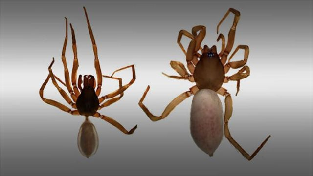 Τούρκοι ανακάλυψαν νέο είδος αράχνης στα Κατεχόμενα
