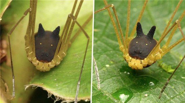 Δείτε την τρομακτική αράχνη που μοιάζει να έχει... κεφάλι σκύλου