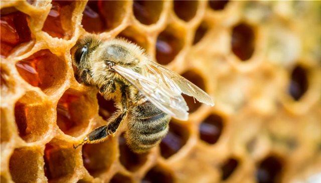 Νότια Αφρική: Μυστήριο με ένα εκατ. νεκρές μέλισσες στο Κέιπ Τάουν