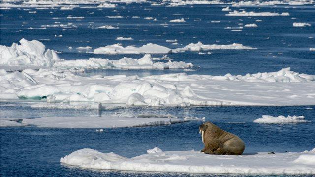 Αρκτική: 2018... η δεύτερη πιο θερμή χρονιά από το 1900