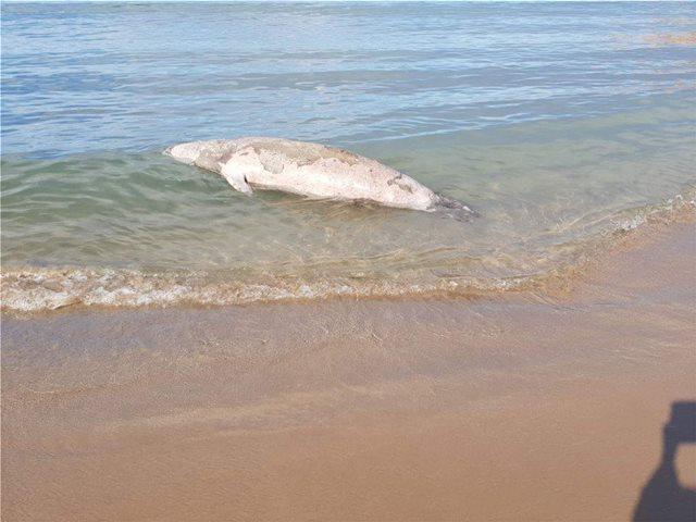 Χανιά: Βρέθηκε νεκρή φώκια στην παραλία των Αγίων Αποστόλων