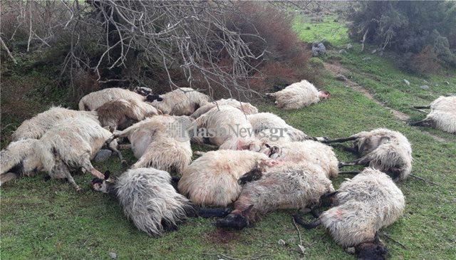 Απίστευτο! Σκοτώθηκε κοπάδι προβάτων στα Χανιά από κεραυνό