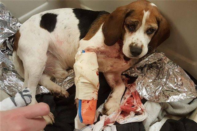 Νέα Υόρκη: Πέταξε τα σκυλιά του από το παράθυρο του αυτοκινήτου!