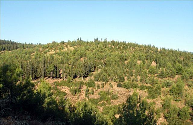Θεσσαλονίκη: 2.000 βραδυφλεγή φυτά θα φυτευτούν στο δάσος του Σέιχ Σου