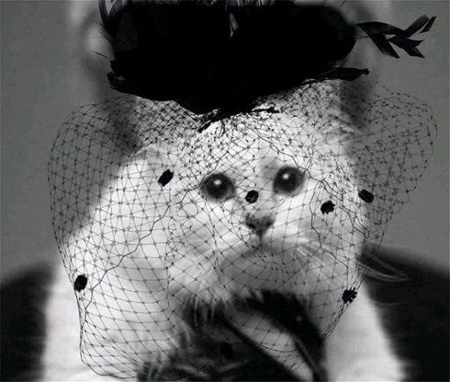 Η γάτα του Καρλ Λάγκερφελντ πενθεί φορώντας μαύρο βέλο