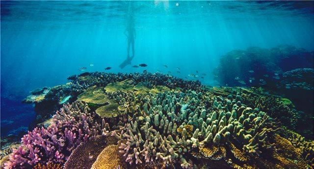 Αυστραλία: Σχεδιάζουν απόρριψη 1 εκατ. τόνων υγρών αποβλήτων στον Μεγάλο Κοραλλιογενή Ύφαλο