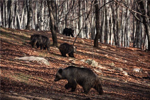 Με μια «απουσία» ξύπνησαν από τη χειμερία νάρκη οι αρκούδες στο Νυμφαίο Φλώρινας
