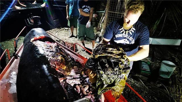 Εικόνες-σοκ: Φάλαινα πέθανε αφού κατάπιε 40 κιλά πλαστικές σακούλες