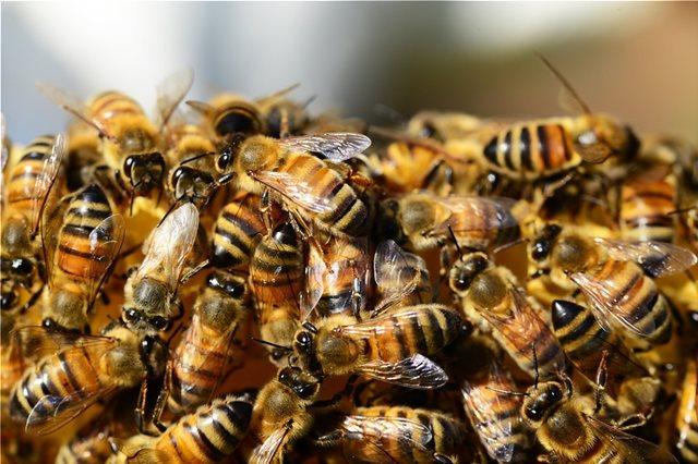 Μέλισσες στην Αυστρία και ψάρια στην Ελβετία «επικοινώνησαν» μεταξύ τους για 1η φορά μέσω... ρομπότ!