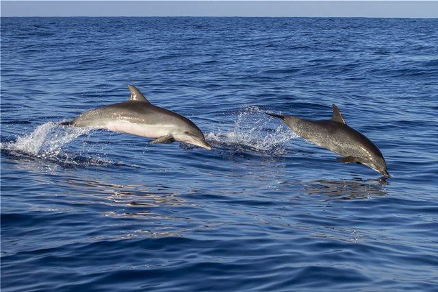 Δελφίνια που είχαν εξοκείλει έπασχαν από Αλτσχάιμερ