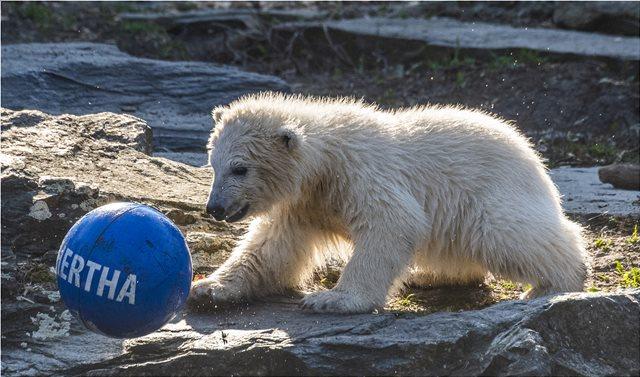 Φωτογραφίες: Χέρτα, η νεογέννητη πολική αρκουδίτσα του Βερολίνου