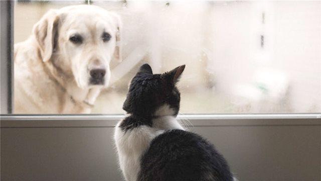 Σκύλο ή γάτα; Τι προτιμούν οι Έλληνες