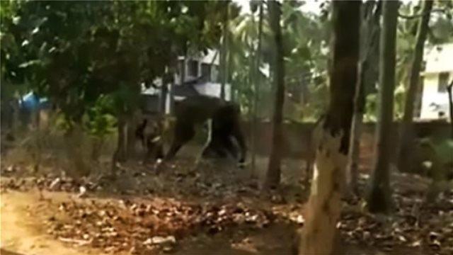 Άφησε νηστικό τον ελέφαντα που πρόσεχε και τον ποδοπάτησε μέχρι θανάτου