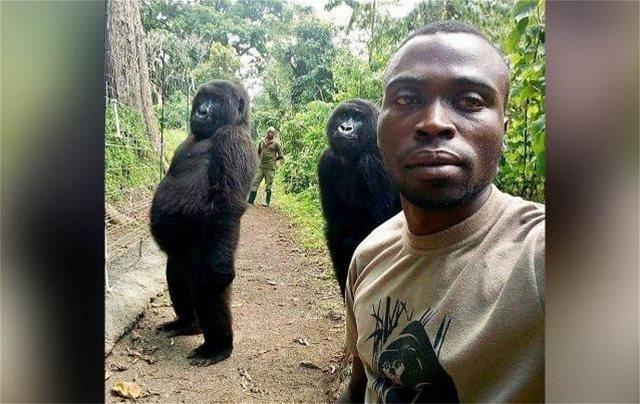 Επική σέλφι στο Κογκό με... δύο γορίλες!