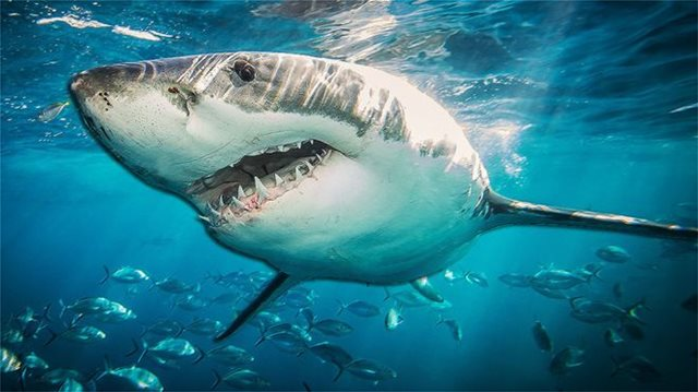 Φωτογραφίες: Viral ο καρχαρίας που πνίγηκε προσπαθώντας να φάει χελώνα