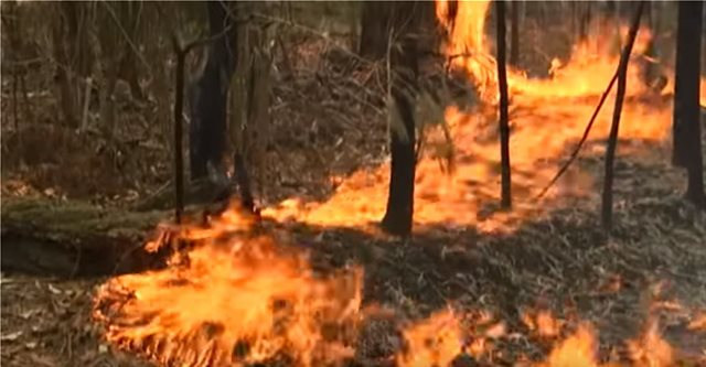 Συναγερμός στην Αυστραλία: «Ποτέ δεν είχαμε τόσες πυρκαγιές»