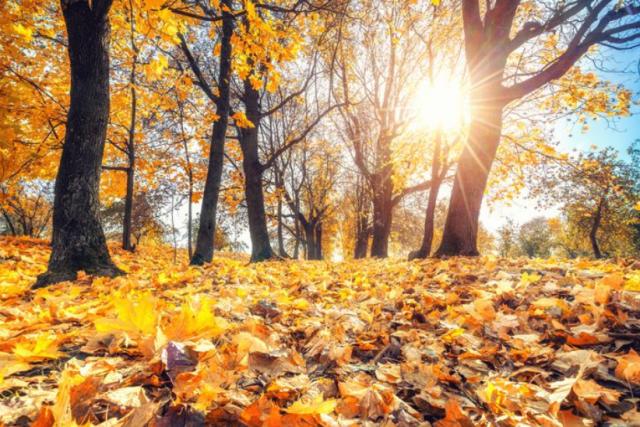 Google Doodle: Πώς καλωσορίζει το Φθινόπωρο