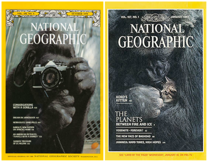 koko-national-geographic-covers_cau1ka