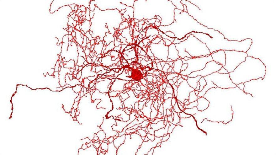 neuron-cell