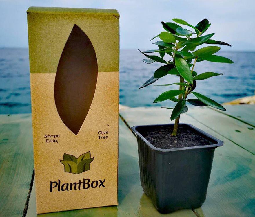 plantbox-1