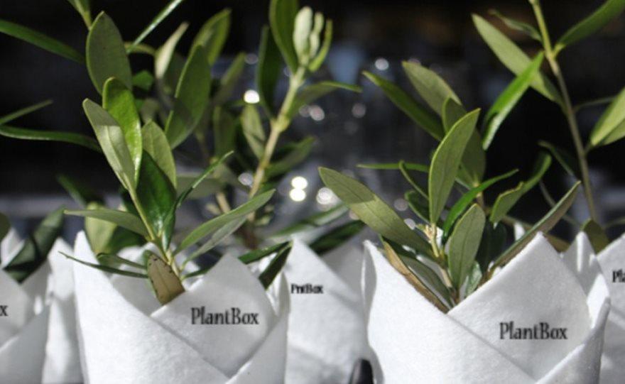 plantbox-2