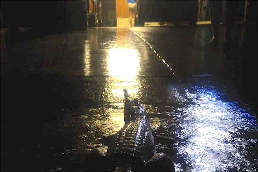 australia-krokodeilos-plimmires