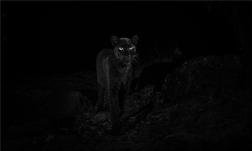 black-leopar3