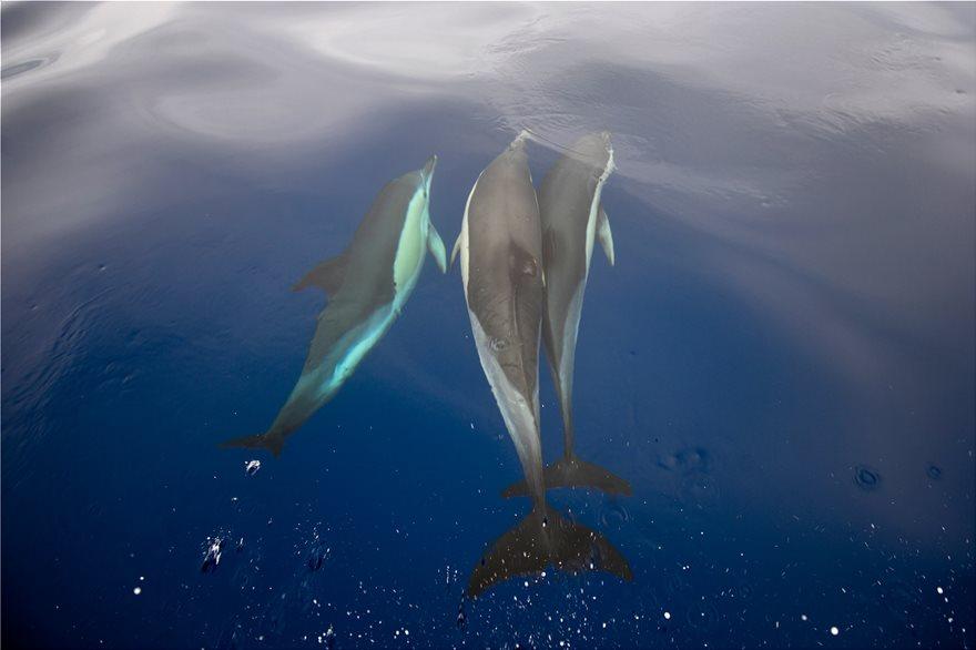 delfinia_in2