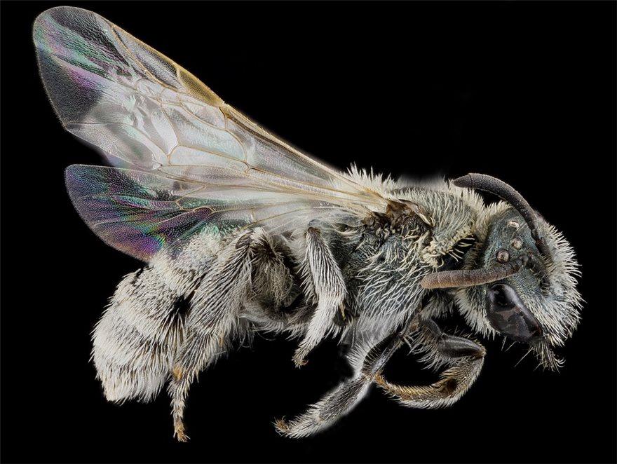 swat-bees
