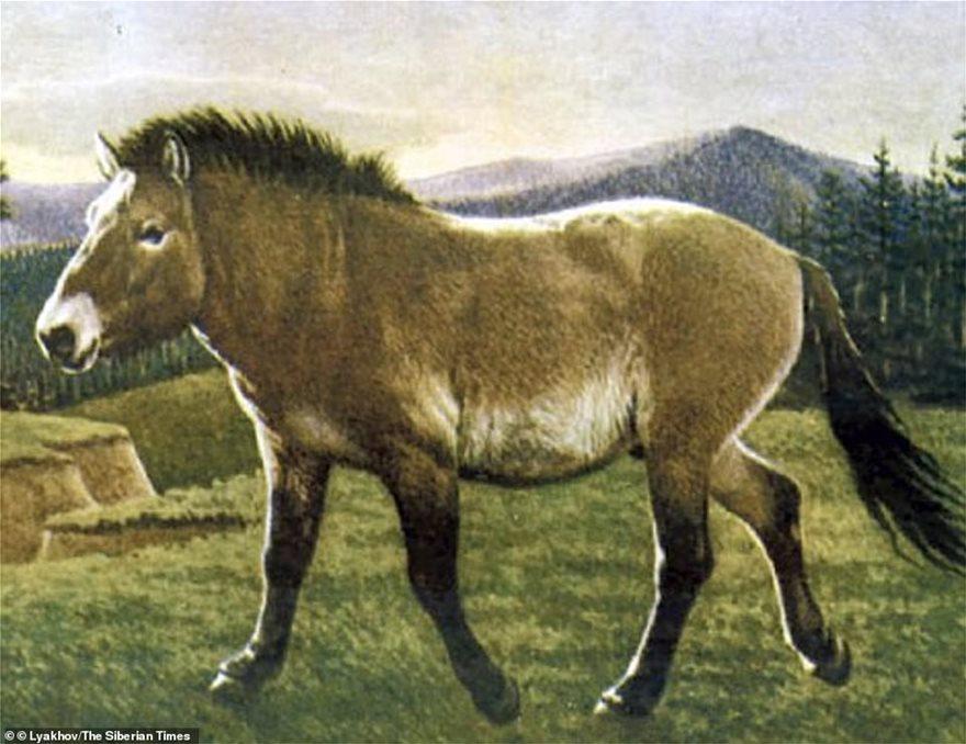 foal-1