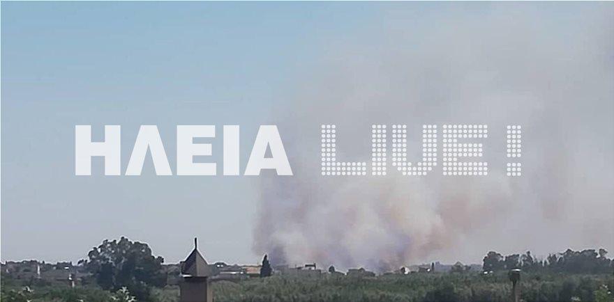 Varda_fotia-1