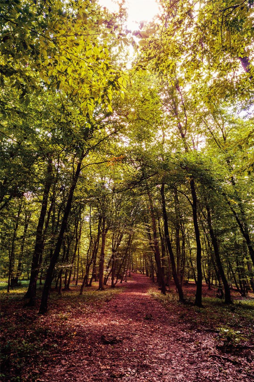 63706831_l_mysterious-forest_-Hoia-Baciu_-Romania