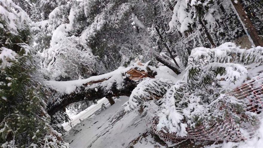 Χιόνι στην Εκάλη (2)