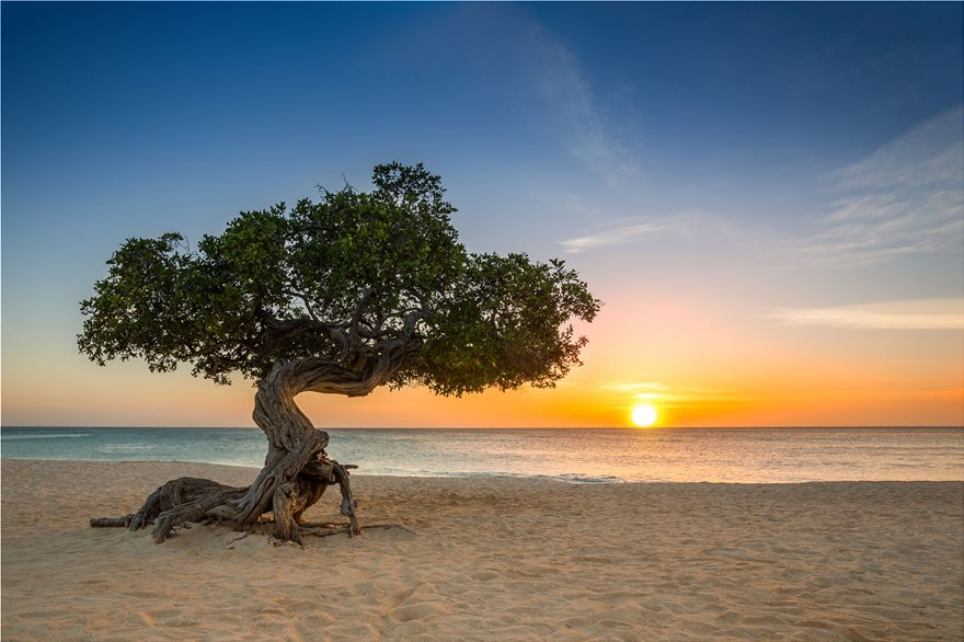 7_Eeagle_beach_aruba_84201686_xl