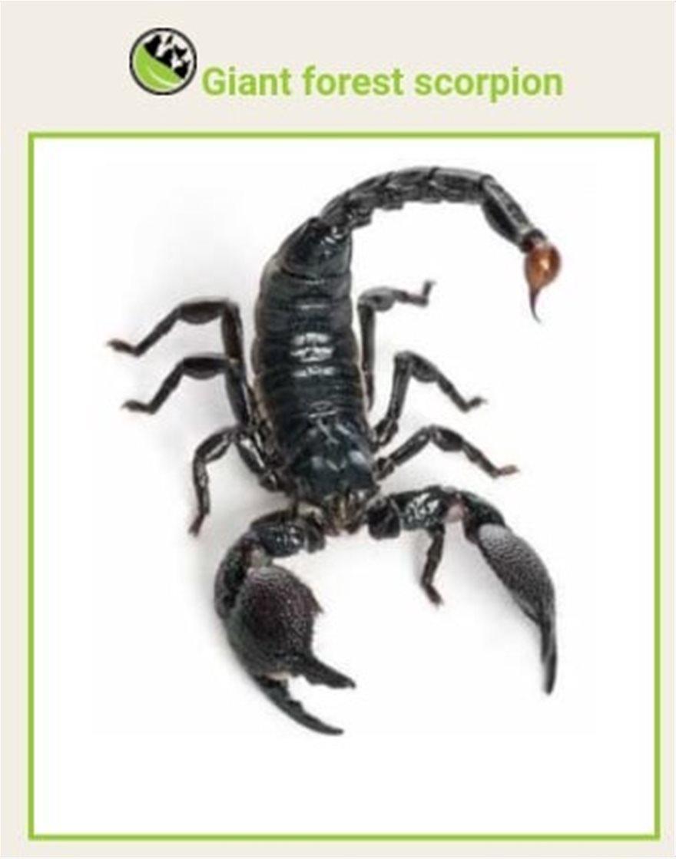 skorpios-5
