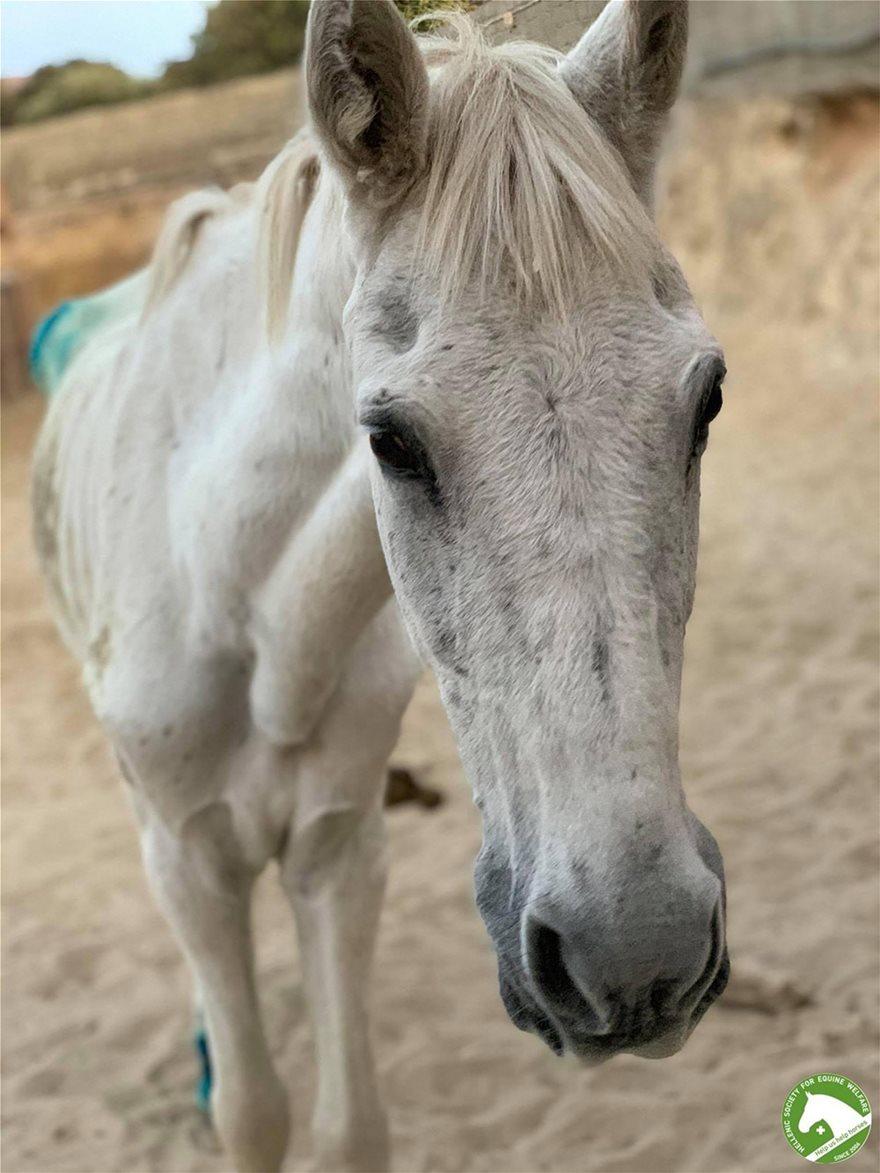horse__1_
