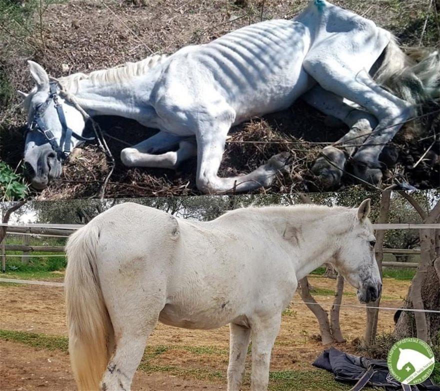horse__2_