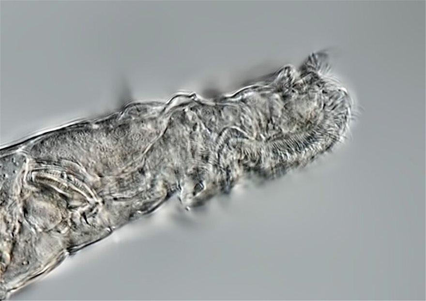 arctic-rotifer-lives-a-1