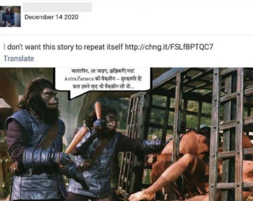 χιμπατζης